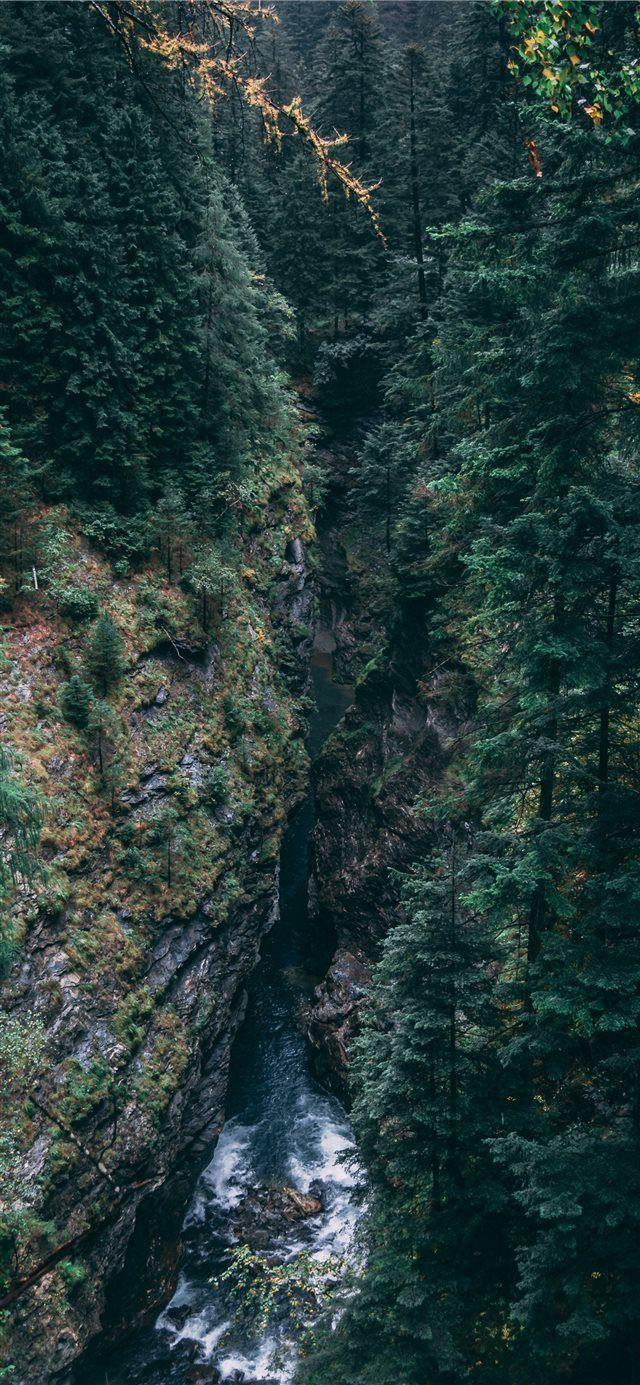 Switzerland Iphone X Wallpaper Forest Misty Switzerland Gorge