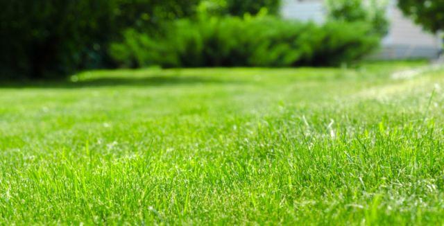 Tipy jak správně pečovat o váš trávník
