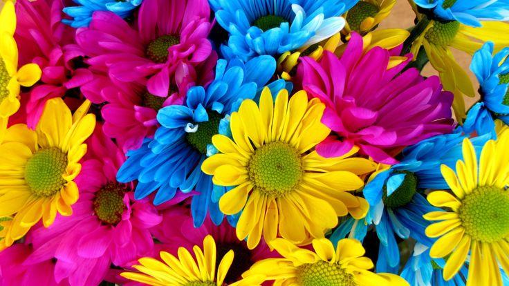 Gorgeous_Daisy_uhd.jpg (3840×2160)