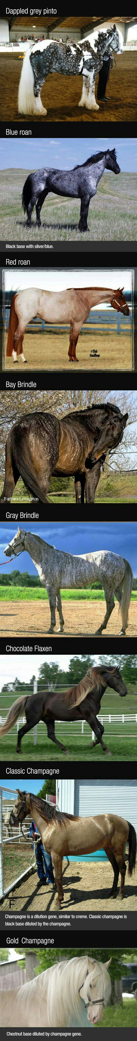 46 best horse color chart images on pinterest color charts horse color chart color charts pretty horses beautiful horses wild horses colors nice appaloosa cavalli nvjuhfo Choice Image