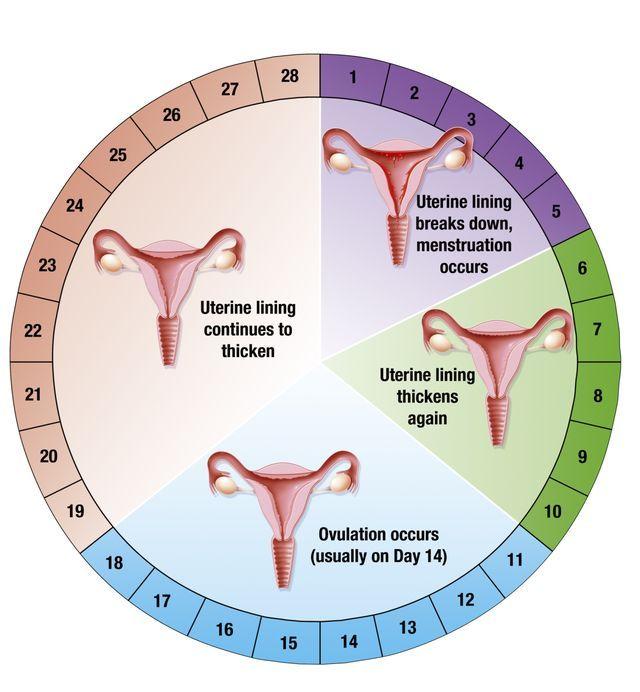 ¿Qué sucede en tu cuerpo la primera semana de embarazo? Desarrollo del bebé