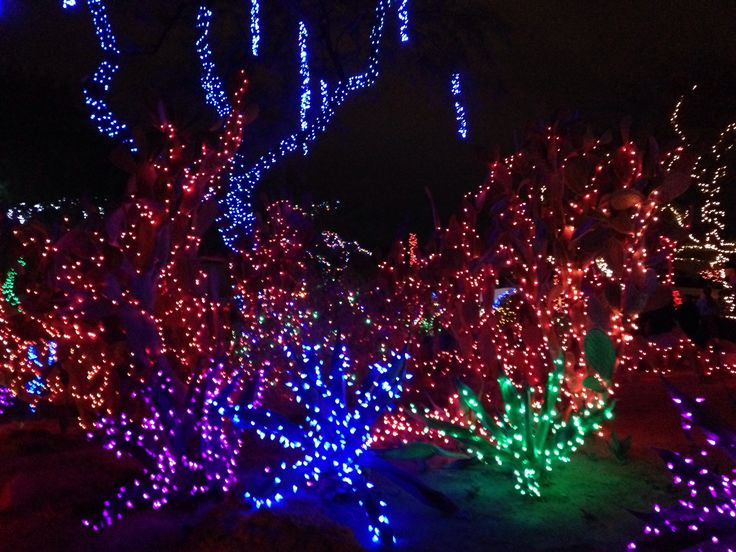 Christmas Lights At The Cactus Garden Vegas Funlas