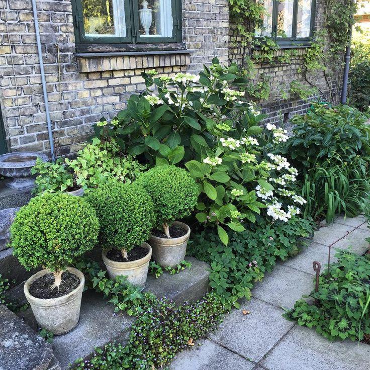 Så er jeg nået til København. Nu er jeg i en skøn have hos min veninde Lone @lonerahbek #clausdalby #have #garden #blomster #flowers