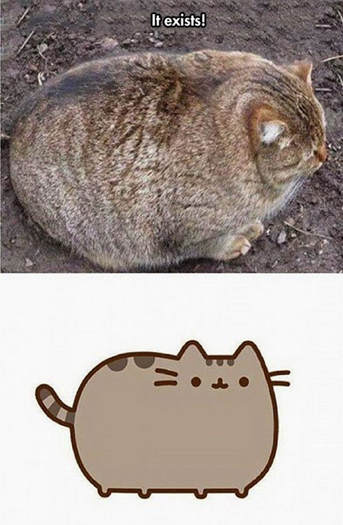 Pusheen Cat Exists.