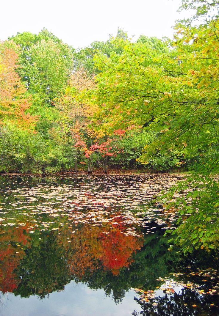 Fall in Massachusetts #travel #USA #mileshare