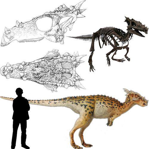 Dracorex. The skull looks like a dragon!