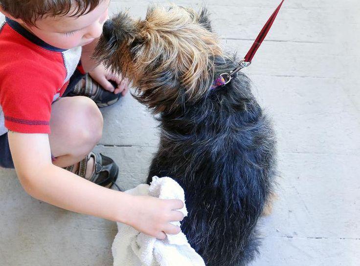 Laten we eerlijk zijn, de meeste honden zijn niet gezegend met een Chanel- of Dior-geurtje. Je kan gelukkig zélf een hondenparfum maken om je viervoeter een fris ruikende vacht te geven.