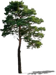 tree - Google Search