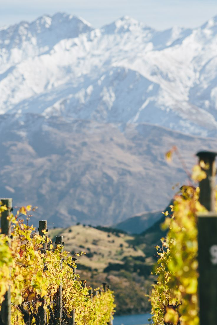 Mountains through vines- image by Wanaka Photography