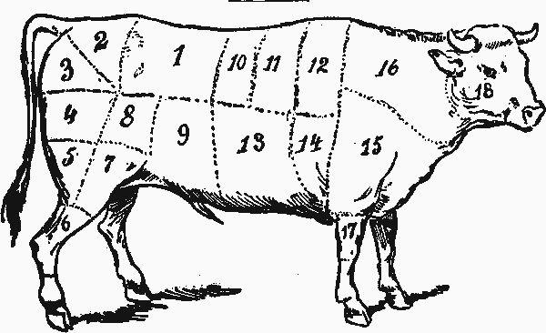 chicken butcher diagram butcher chart chicken chicken diagram home