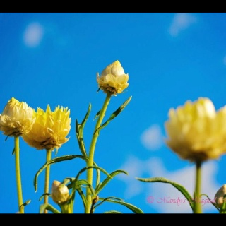 Day 7 - Garden #photoadayjuly