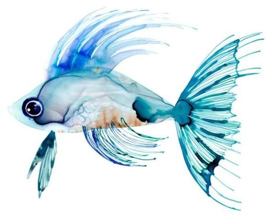 17 best ideas about watercolor fish on pinterest for Fish out of water watercolor