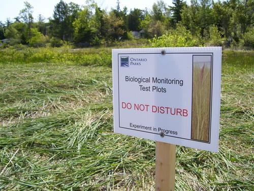 Invasive Species Management: Phragmites Cut