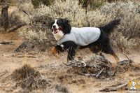 Ruffwear Swamp Cooler Dog Cooling coat now on sale. Help your dogs through the summer and hot days in comfort.