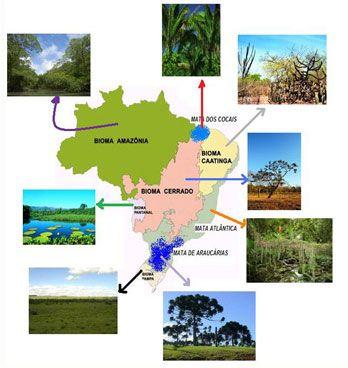 Biomas Brasileiros 2