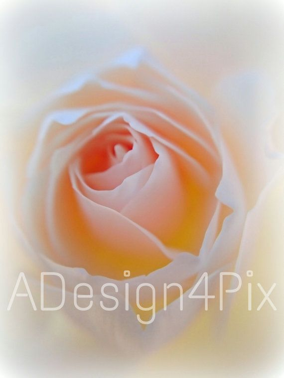 Macro White Rose Picture  Nature Photography  by ADesign4Pix
