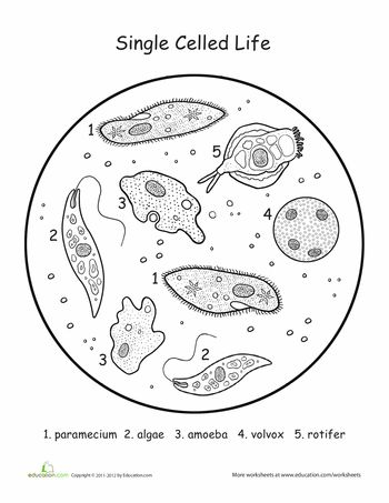 Worksheets: Single-Cell Organisms: Life Science Coloring