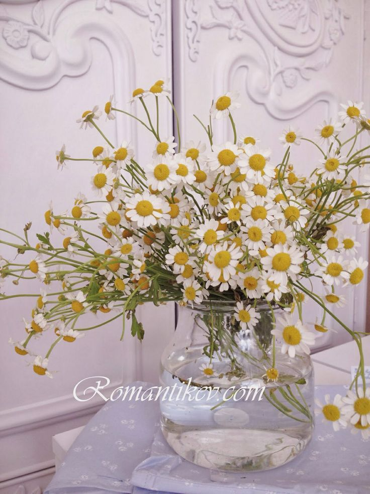 Kır evi dekorasyonu Kır çiçekleri Romantik kır evi
