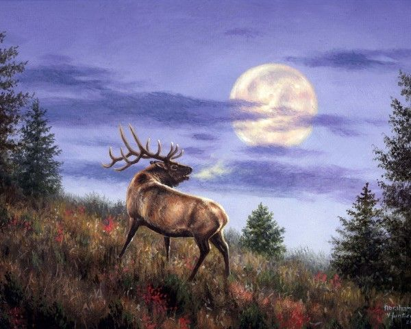 """""""Moonlight serenade.""""   © d' Abraham Hunter.   """"This American artist very kindly allowed me to post his work on my blog and I thank."""" http://pussycatdreams.centerblog.net"""