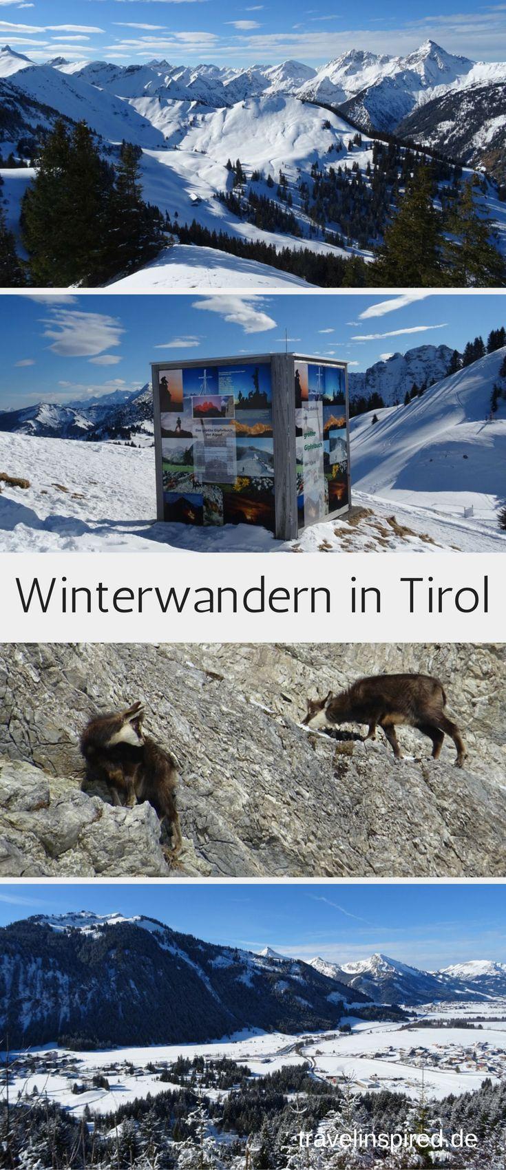 Im Tannheimer Tal in Österreich kannst gibt es auch im Winter einige tolle Wanderungen mit genialer Aussicht über Tirol! Und vielleicht entdeckst du sogar ein paar Gämsen. #wandern #winter #tannheimertal #österreich #tirol #winterwanderung