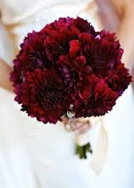 Image result for burgundy and white chrysanthemum bouquet