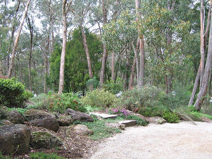 46 best Australian Native Garden images on Pinterest Landscaping