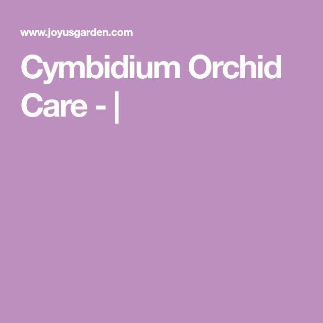 Cymbidium Orchid Care - |