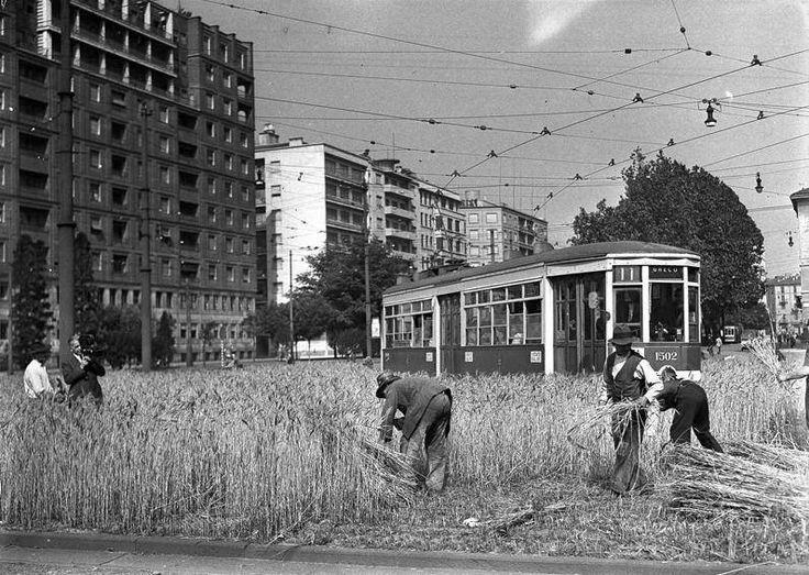 Cartoline dal passato: in tempo di guerra, a #Milano, il grano si coltivava in città.  Postcards from the past: in #Milan, during the war, people cultivated wheat in town.