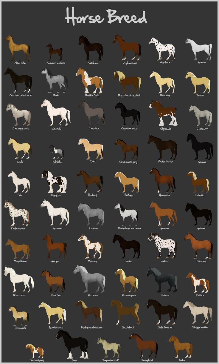 Imperatore horse vans for sale - Avour Post Today Is For True Equine Lovers As Well As Those Who Appreciate Art We Recently Found This Horse Breed Chart At Deviant Art And Knew That You
