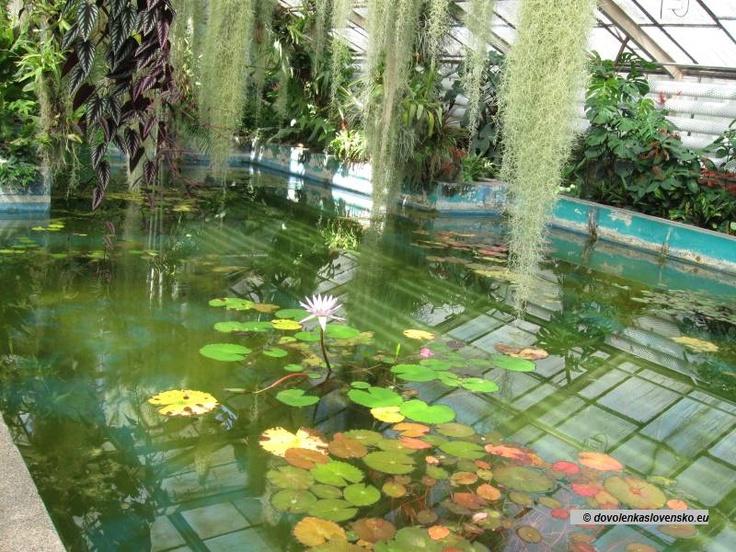 Bratislava - Botanická záhrada 9