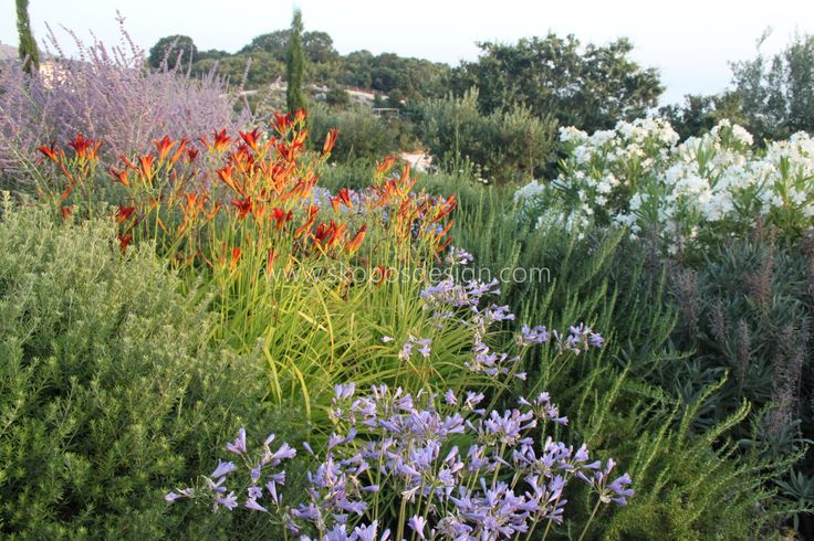 agapanthus and hemerocallis