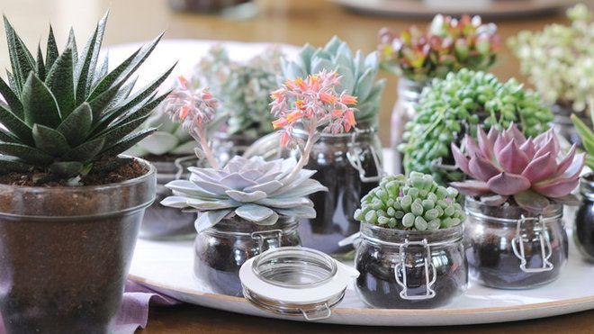 Composizioni In Vetro Piante Grasse : Succulents piante grasse vasetti di vetro composizione