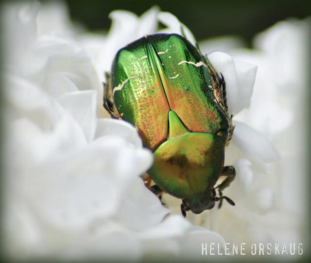 Green bug!