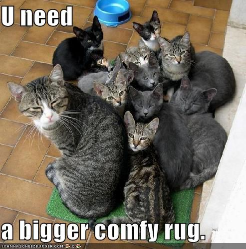 I'll see to it right away....: Cats, Plastic Bags, Dogs Cat, Comfy Rugs, Crazy Cat, Mats, Funny Animal, Silly Cat, Cat Lady