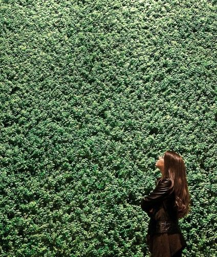 Green living wall by Blumohito