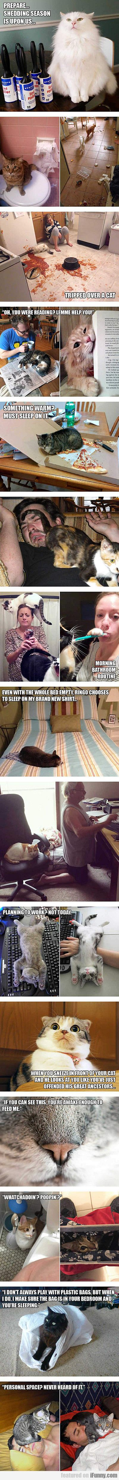 Only Cat Owners Will Understand
