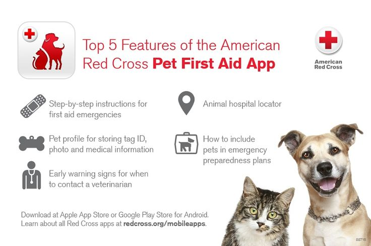 Get instant access to expert guidance on how to maintain your pet's health, what to do in emergencies and how to include pets in your household's emergency preparedness plans with the American Red Cross Pet First Aid App.
