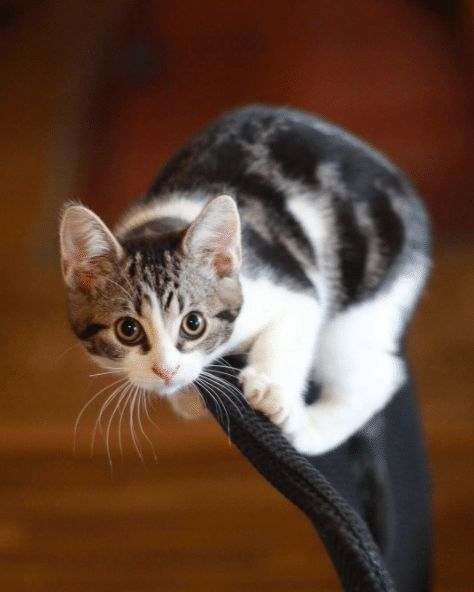 20 Weird Facts About Cats You Probably Didn't Know - Cats In Care - Page 20