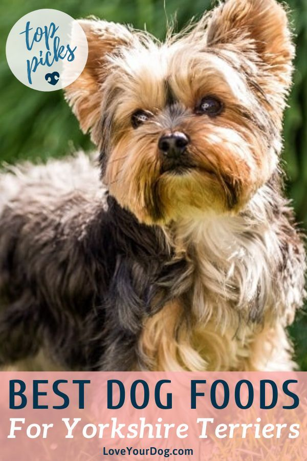 Best Dog Foods For Yorkies Puppies Adults Seniors Yorkie Dogs Best Dog Food Yorkie