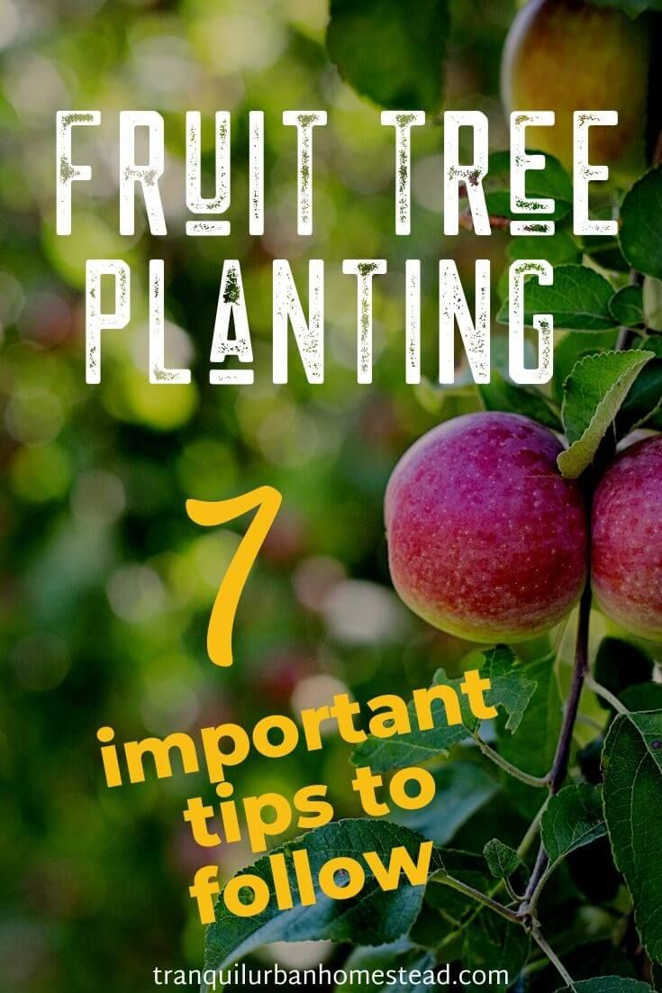 7 Important Fruit Tree Planting Tips You Need To Follow Trees To Plant Fruit Trees Fruit Plants