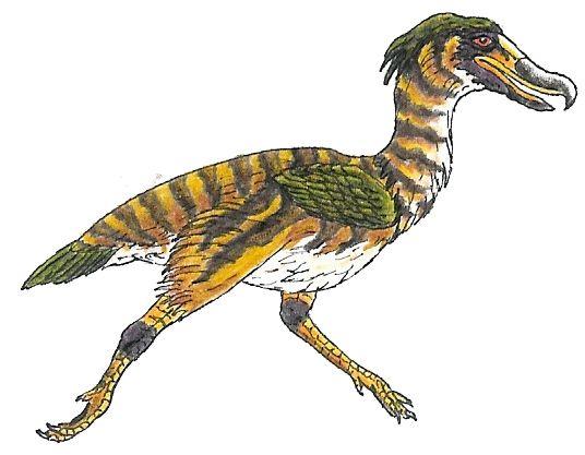 Mesembriornis incertus, Late Miocene to Early Pliocene, 10 ... - photo#25
