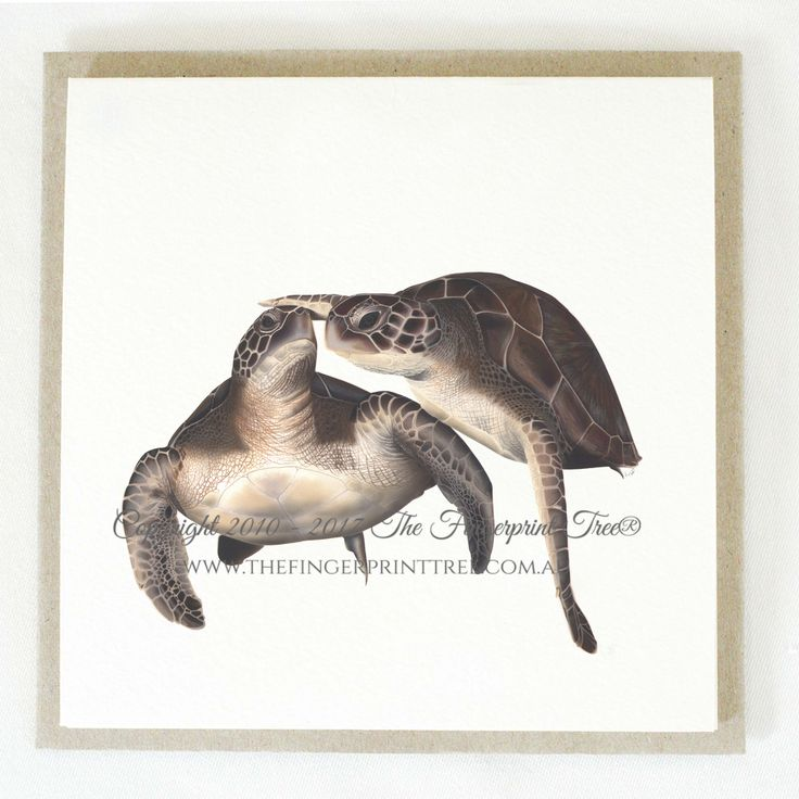 Gift card - Turtles:  Cards! by The Fingerprint Tree® is our couture range of gift cards featuring illustrations by Ray Carter, Chief Artist & Founder.  Made-to-order and Giclée printed at our Southern Highlands studio.   We sell direct to the public and to retailers.