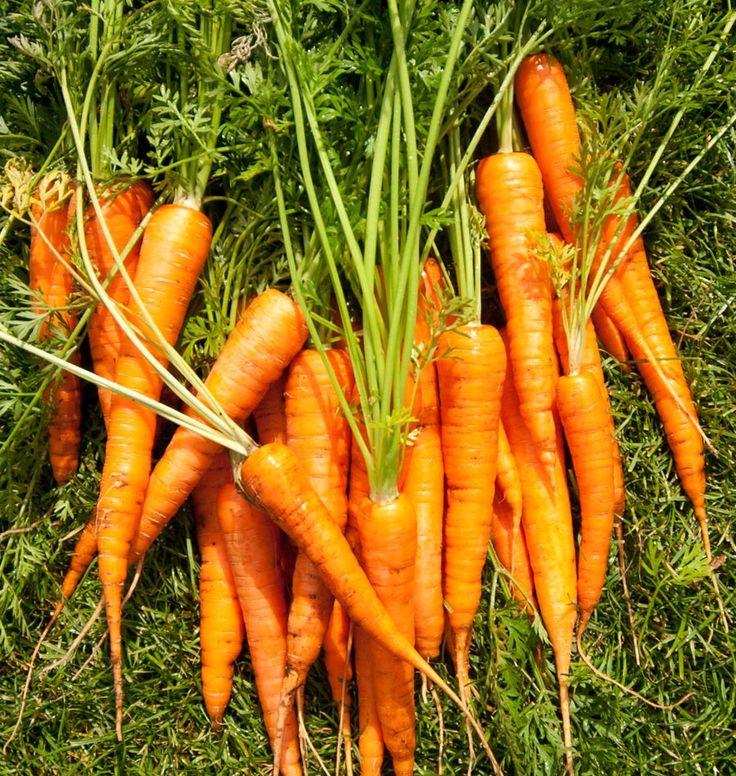 Die besten 25 Growing carrots from seed Ideen nur auf Pinterest