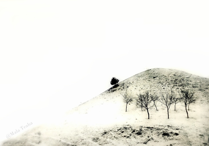 winter on hill, Arad County, Romania