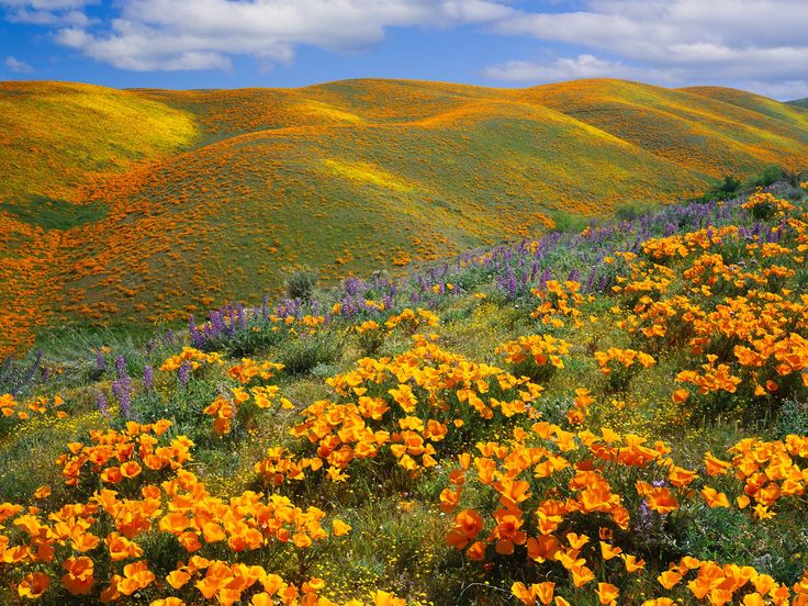 Traveling through California is like getting a crash course in America's natural beauty: all the windswept deserts, Redwood forests, rocky coastlines, and rows of vines.
