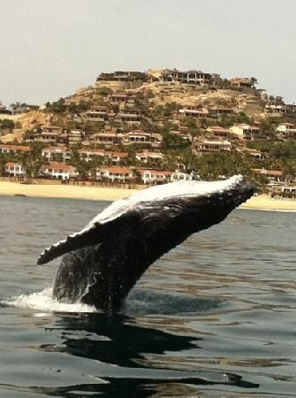 Whale Watch Cabo ~ Cabo San Lucas -- tours with marine biologists who are also pro photographers