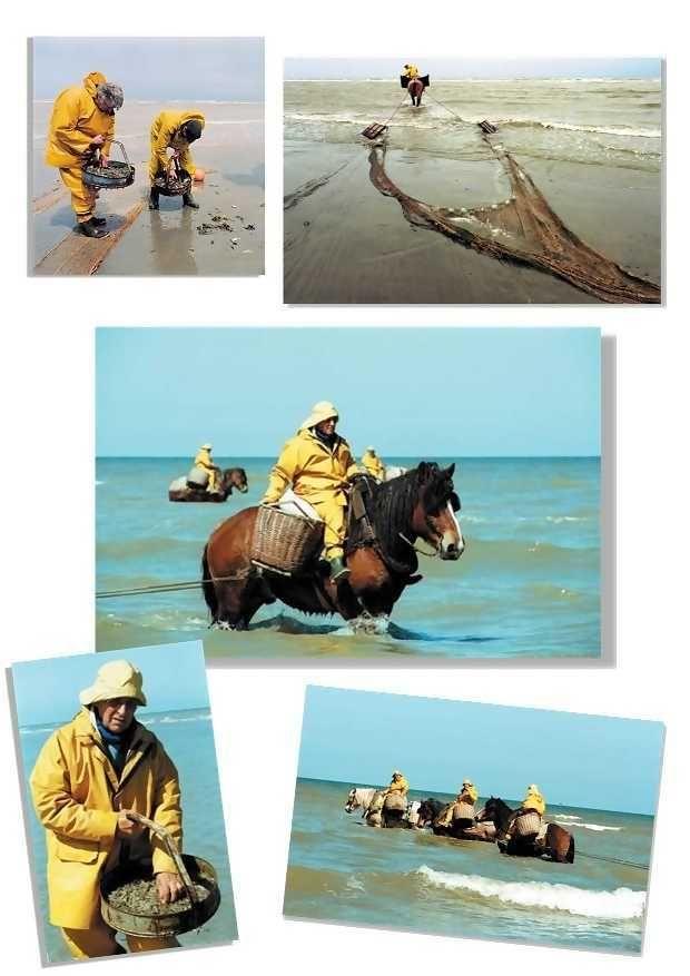 Les p cheurs de crevettes cheval la plage d - Quand tailler les pechers ...
