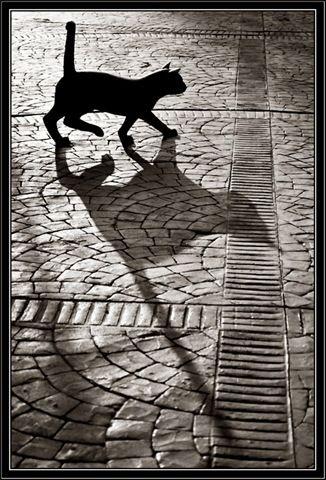 a black shadow cat is a familiar
