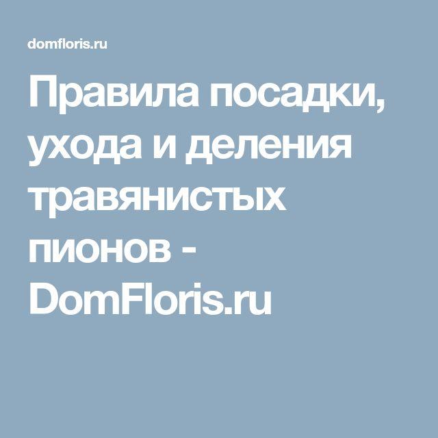Правила посадки, ухода и деления травянистых пионов - DomFloris.ru
