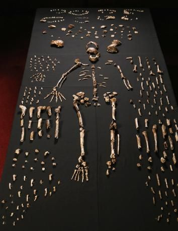 an overview of hominid species and human evolution Start studying human evolution learn vocabulary the hominid australopithecines are generally accepted to be different which species of human has been most.